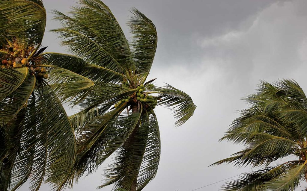 palm trees during a monsoon storm
