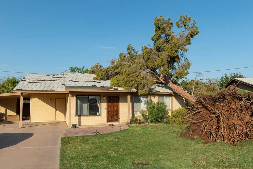 tree fell on home